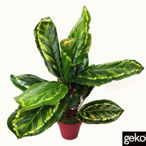 Artificial Medium 50cm Calathea Veitchiane Plant