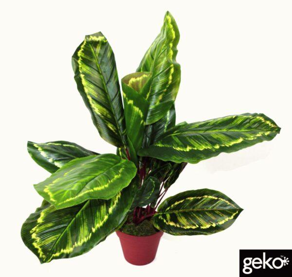 Artificial Medium 50cm Calathea Veitchiane Plant