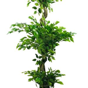Artificial Ficus Leaf Topiary Mini Leaves 175cm