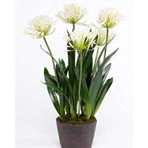 "artplants.de Artificial agapanthus NASH, cream, 30""/75cm - Fake agapanthus"