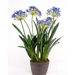 """artplants.de Artificial agapanthus NASH, blue, 30""""/75cm - Fake agapanthus"""
