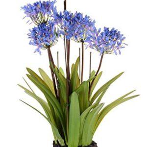 "artplants.de Set 2 x Artificial Agapanthus INJALA in a root ball, 6 flowers, blue, 31""/80cm - 2 pieces Artificial flowering plant/Fake agapanthus"