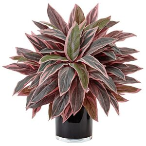 Nearly Natural Caladium Artificial Plant in Black Glossy Planter, Green