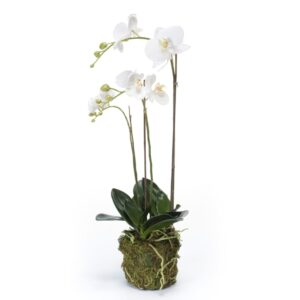 Emerald Artificial Phalaenopsis Orchid 70 cm White