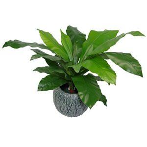 Leaf LEAF-7050 Artificial Bird's Nest Fern Plant Black Plastic Pot, 60cm
