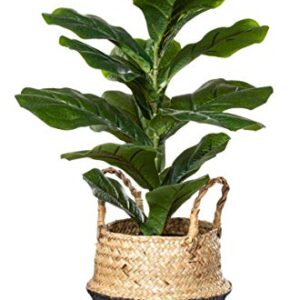 """PLANTAE Artificial Fiddle Leaf Fig Tree Faux Realistic 22"""" Inch Tall 18 Leaves for Home and Office Indoor Decor with Handmade Natural Seagrass Woven Black Basket"""