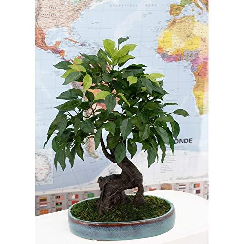 Ligne Déco   Artificial Bonsai Tree in Oval Ceramic Pot Blue 249 Leaves   41 cm   Artificial Green Plant   Japanese Zen Bonsai   Home Office Decoration